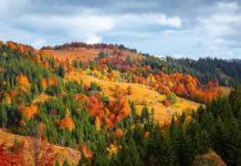 Dlaczego warto pojechać w góry jesienią?
